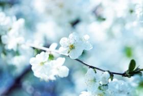 pavasario_sveikata