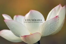 udumbara_centras