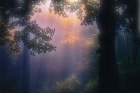 N. Gabija Wolmer Apie medžių energiją