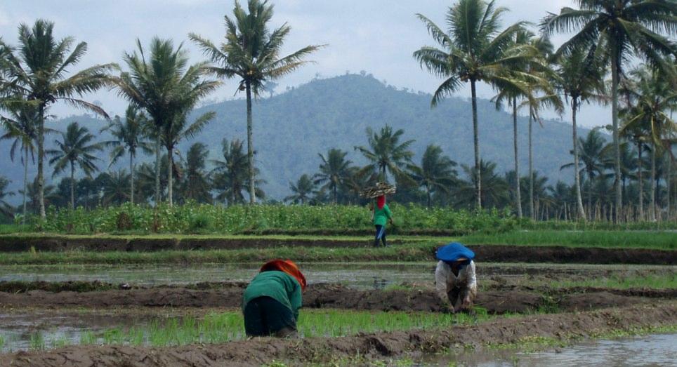 Bali kaimo gyventojų kasdieninė veikla