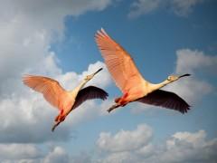 Dvasios ženklai, susiję su paukščiais