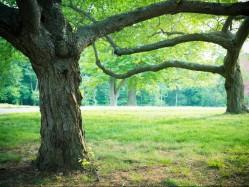 Bendravimas su medžiais